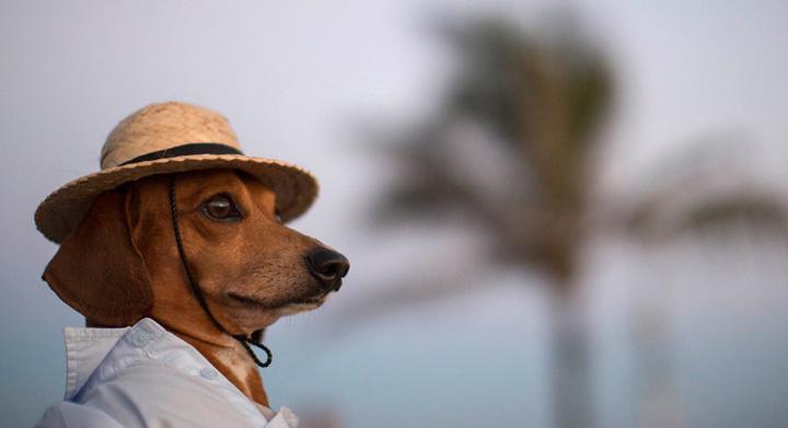 Perro con sombrero en la playa