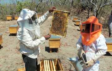 Dos apicultores del estado de Oaxaca.