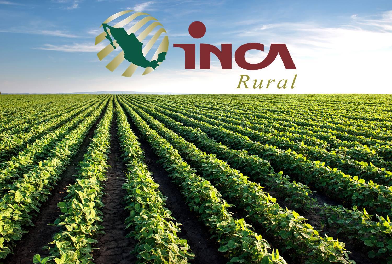 Instituto Nacional para el Desarrollo de Capacidades del Sector Rural A.C.
