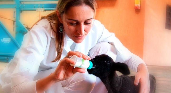 Veterinaria dando leche a cabra