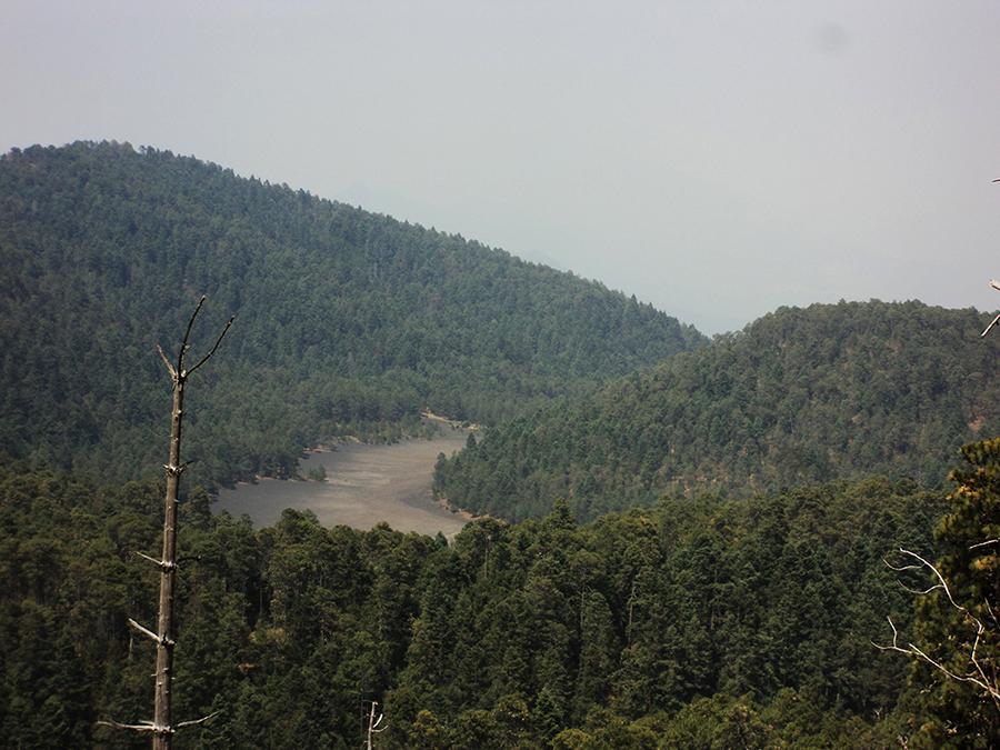 Área de Protección de Flora y Fauna Pico de Tancítaro, Michoacán