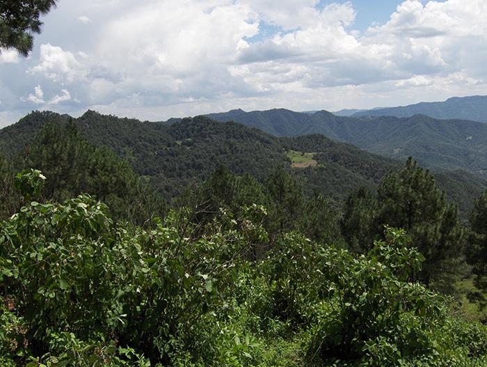 El Potosí Cañada Grande celebra su 80 aniversario como Parque Nacional.