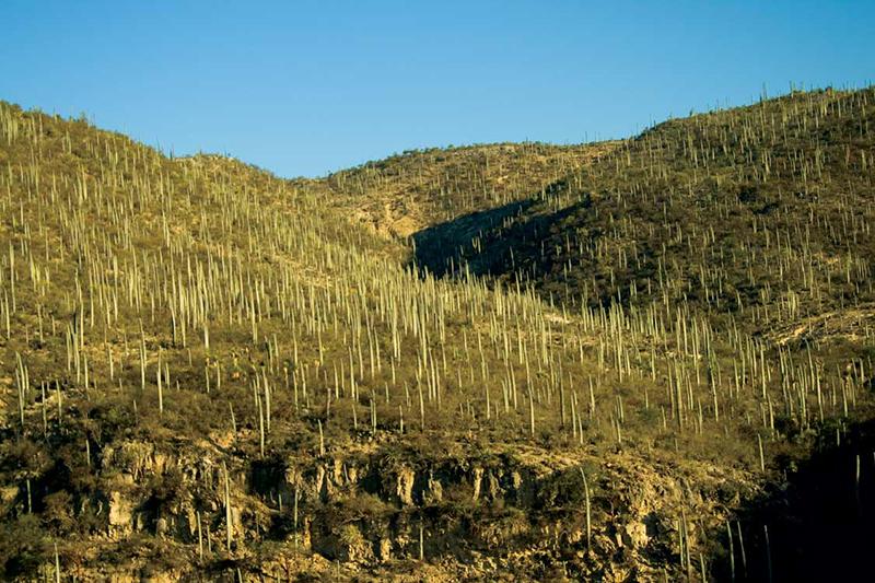 Reserva de la Biósfera Tehuacán-Cuicatlán, Patrimonio Natural de México