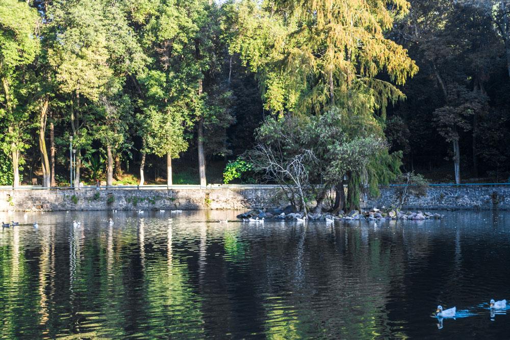 80 aniversario del Parque Nacional Fuentes Brotantes de Tlalpan.