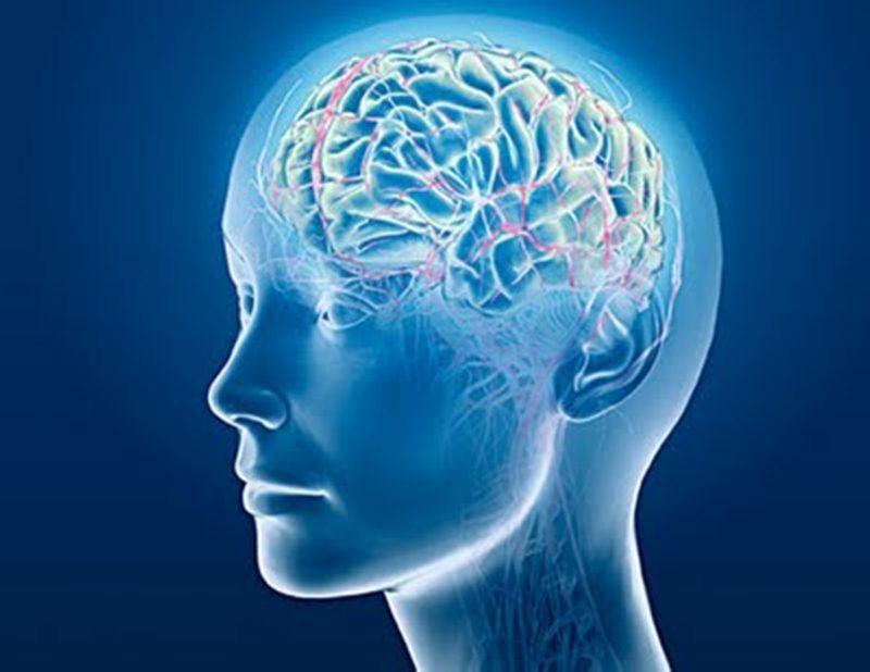 Imágen de una cabeza con transparencia del cerebro y sistema nervioso central