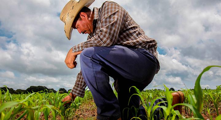 Agricultor hincado en el terreno de cultivo