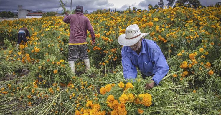 La flor de zempoalxochitl no es solo una flor, es un ícono de México   a través del cual el mundo nos reconoce.