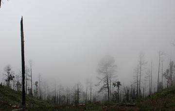 Leyendas de los bosques mexicanos (Parte 2)