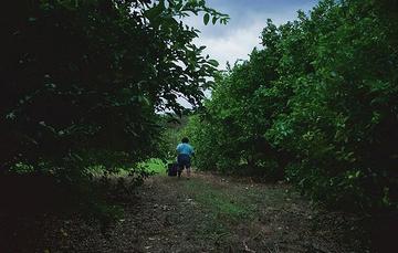 Mujer rural en campo de limones, Yucatán.