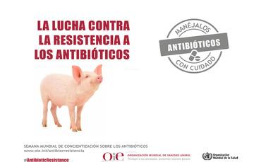 Colaboración constante entre organizaciones para evitar la aparición y expansión de la resistencia ante estos medicamentos