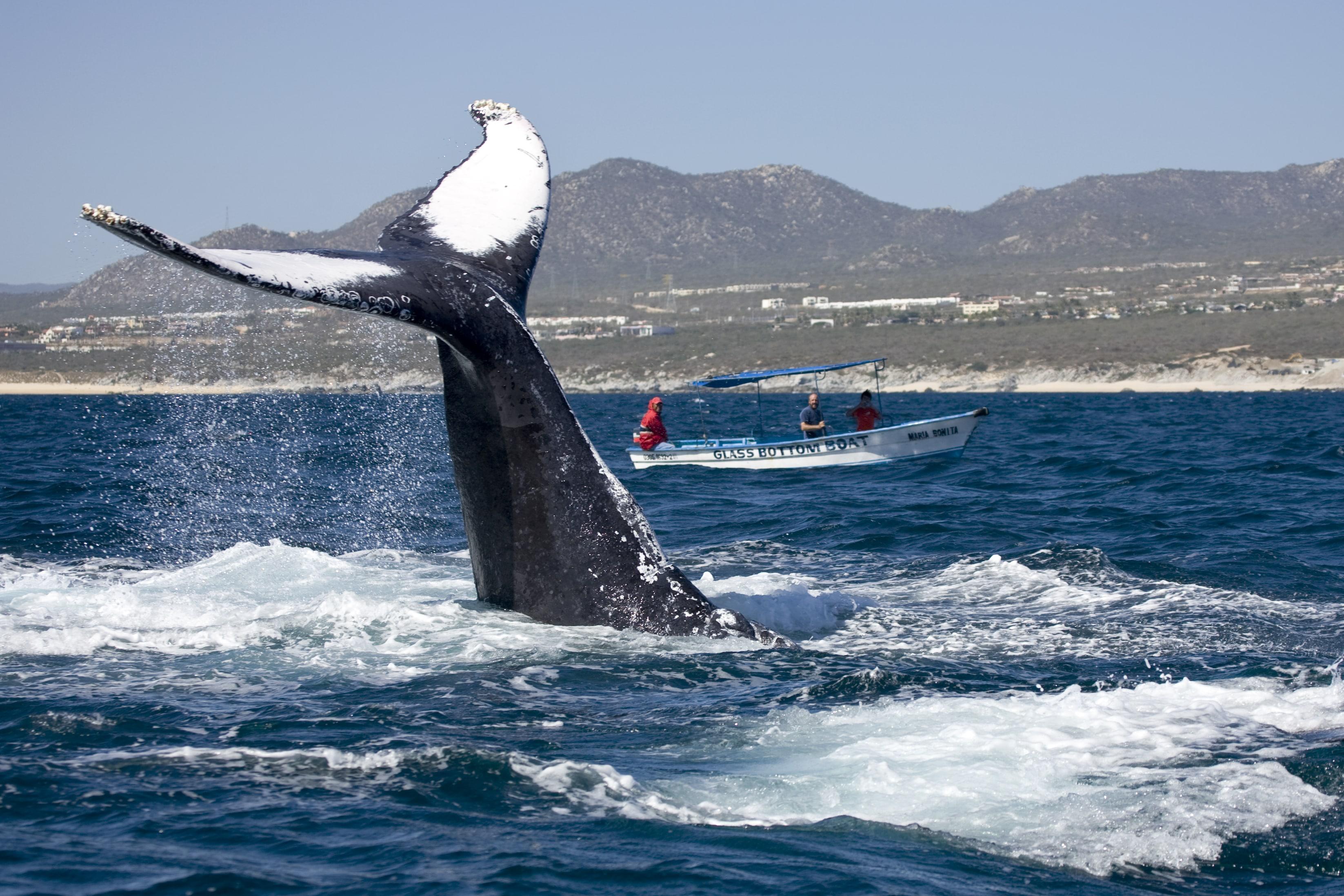 personas observando ballenas e el vizcaino