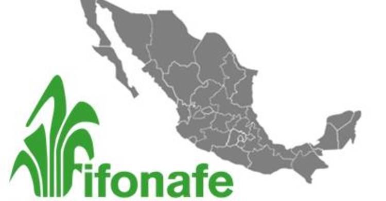 Representaciones Estatales FIFONAFE