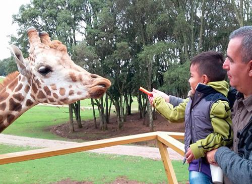 Un hombre cargando a un niño dando de comer a una jirafa.