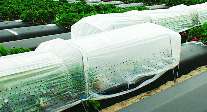 Agricultura protegida con micro túnel