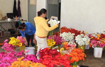 Productoras de flores del Edoméx