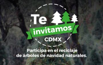 Pasa la voz y lleva tu árbol de Navidad natural a reciclar.