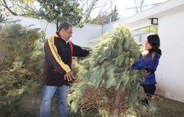 Abren centros de acopio para árboles de Navidad