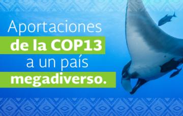 La COP13 fue un catalizador de acuerdos en favor de la biodiversidad