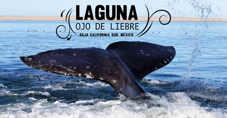 Sitio ideal para la preservación de ballenas, peces y aves marinas