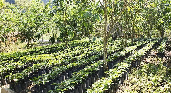 Agricultura De Traspatio Producción Agrícola En Beneficio