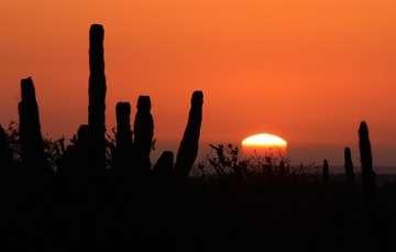 Rehabilitan Santuario de los Cactus en Baja California Sur