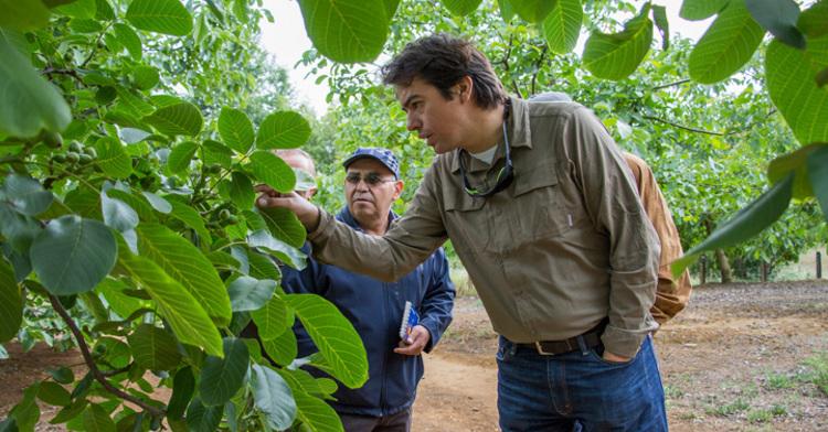 Agrónomo revisando cultivos