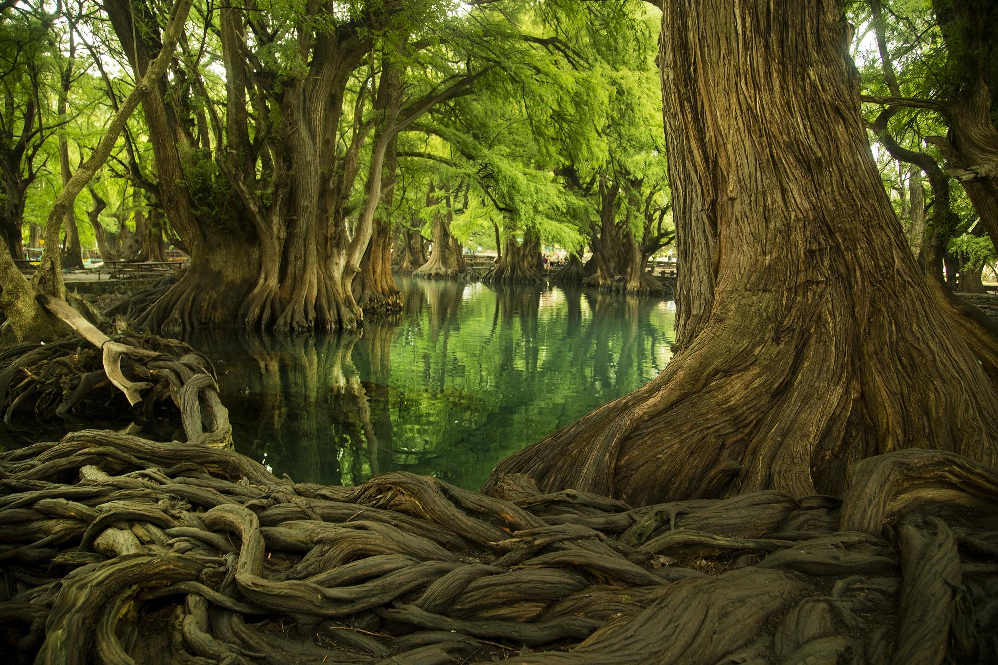vista del lago de camecuaro