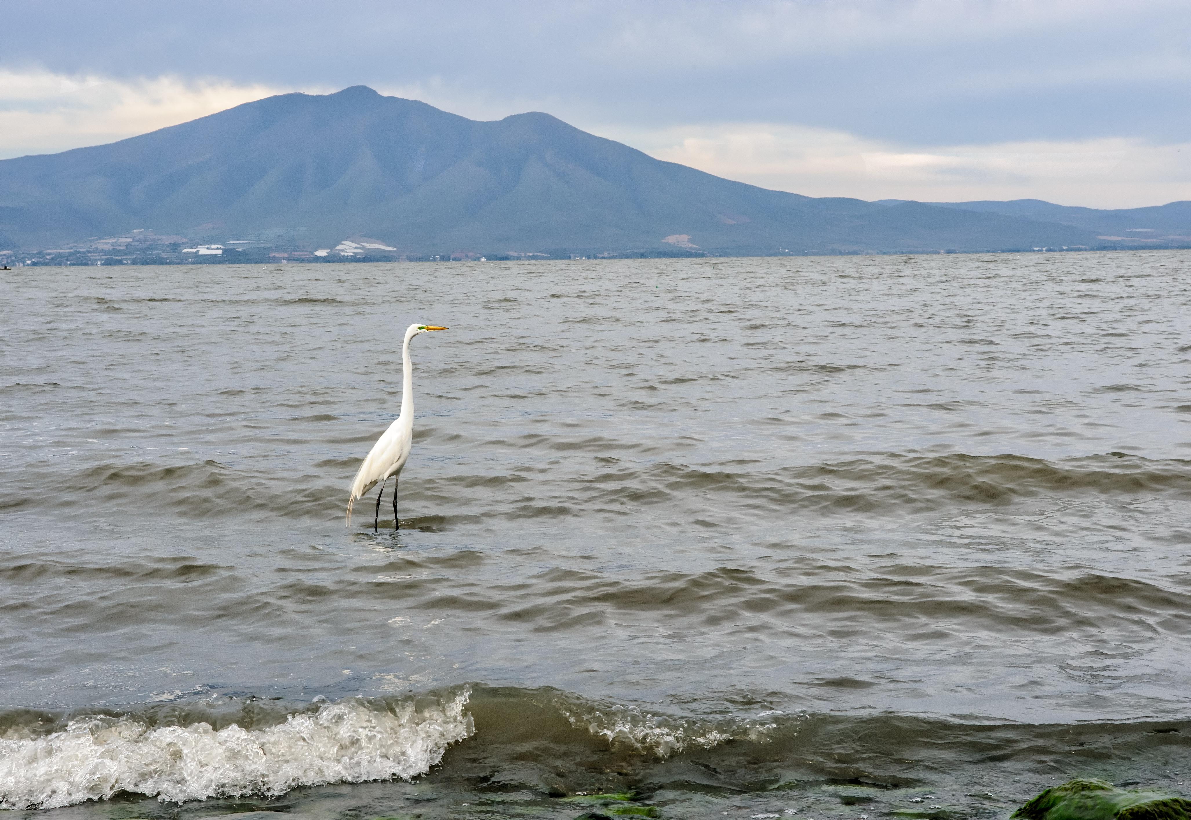 ¿Sabes cuál es el lago más grande de México?