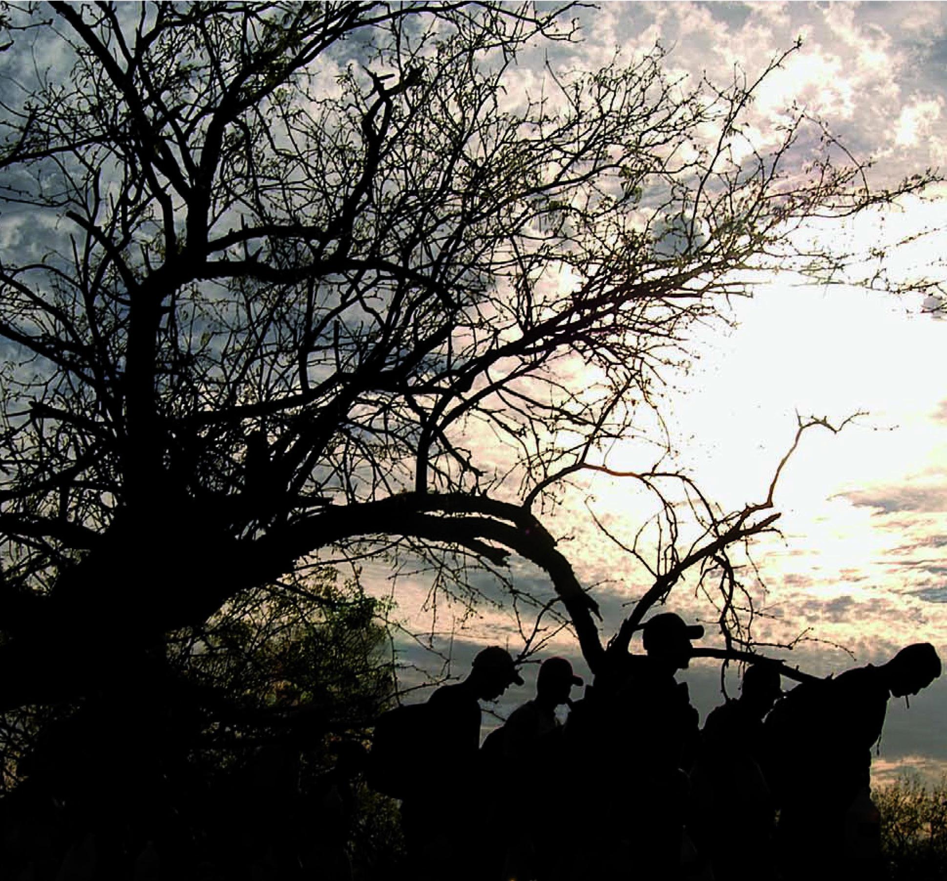 Migrantes a la sombra de un árbol sin hojas