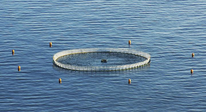 Jaulas flotantes para cultivo de peces en el mar for Jaulas flotantes para piscicultura