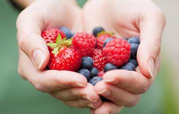 Berries, frutillas, frutos rojos, bayas mexicanas