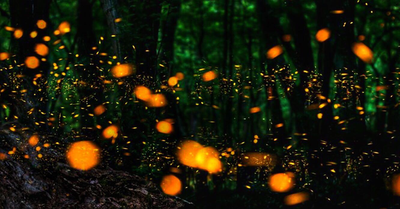 luciérnagas volando en el bosque