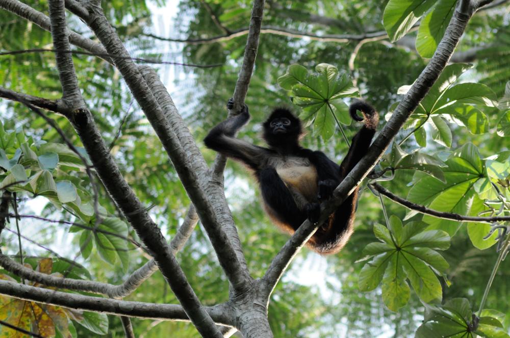 Bosques tropicales ecosistemas con gran riqueza de for Medio en el que habitan los arboles