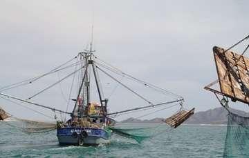 """A las redes agalleras se les conoce también como """"redes fantasma"""", porque suelen ser abandonadas en el mar, pero continúan matando cetáceos, tortugas marinas y tiburones, entre otras especies protegidas que quedan atrapadas o gravemente lesionadas."""