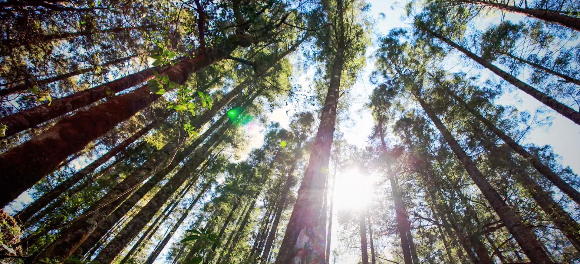 El objetivo de esta celebración es generar conciencia sobre el valor que tienen los árboles en los distintos ecosistemas en los que vivimos.