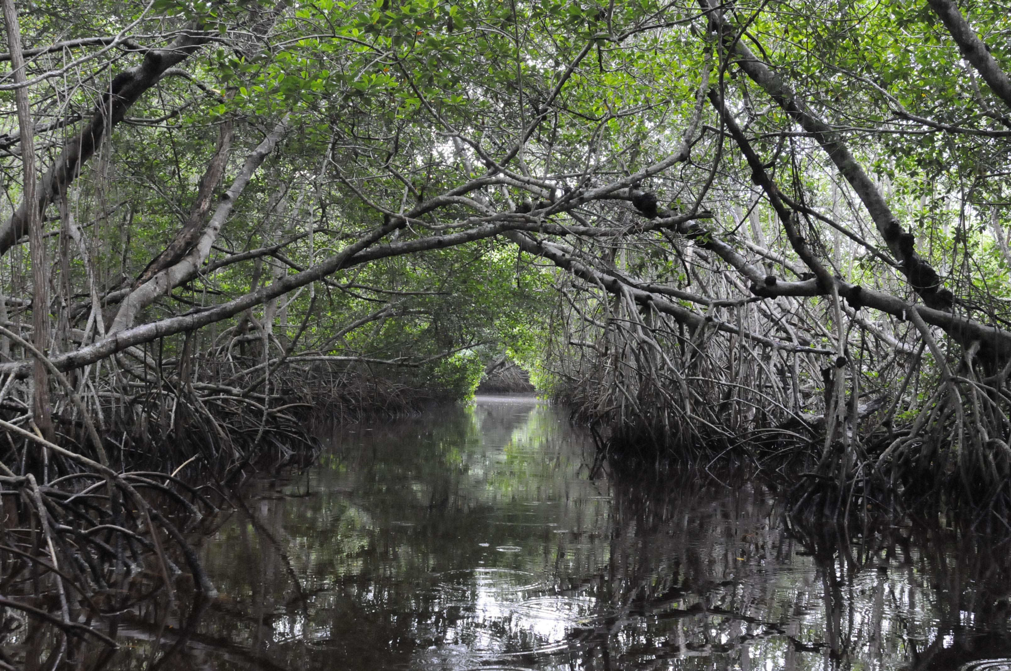 Día Internacional de Conservación del Ecosistema de Manglares | Secretaría  de Medio Ambiente y Recursos Naturales | Gobierno | gob.mx