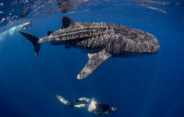 Programa De Turismo De Naturaleza En La Región Del Alto Golfo De California Y El Mar De Cortés
