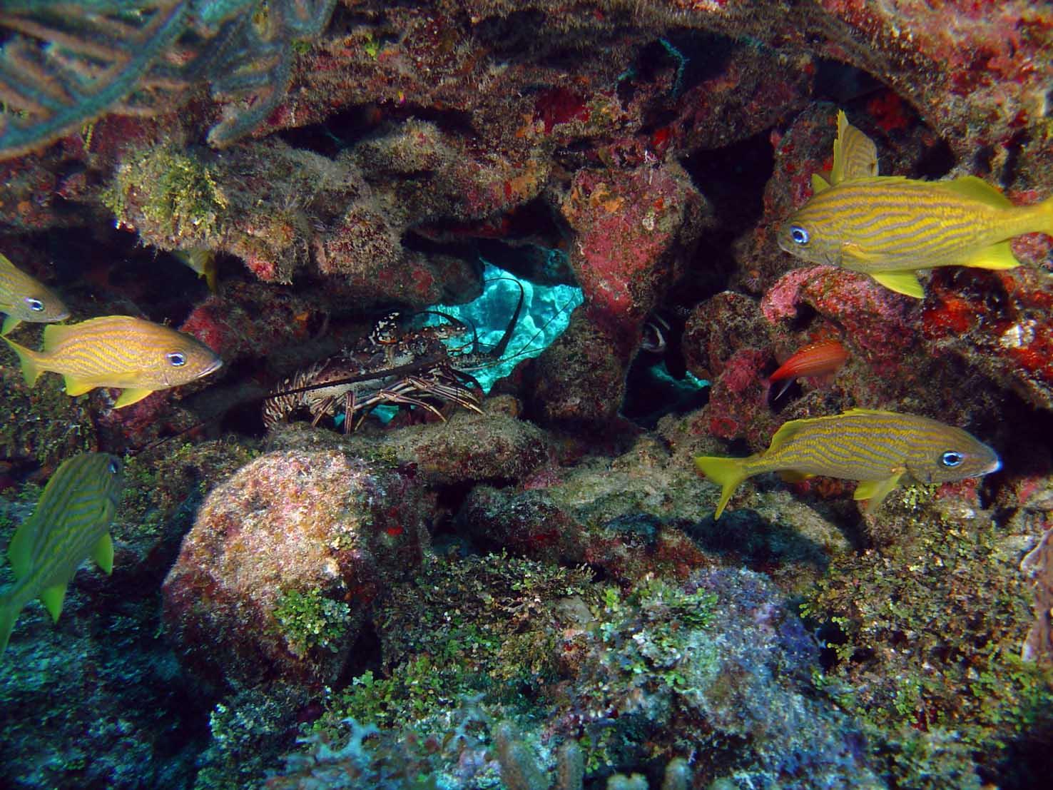 Vista submarina de grupo de peces en coral.