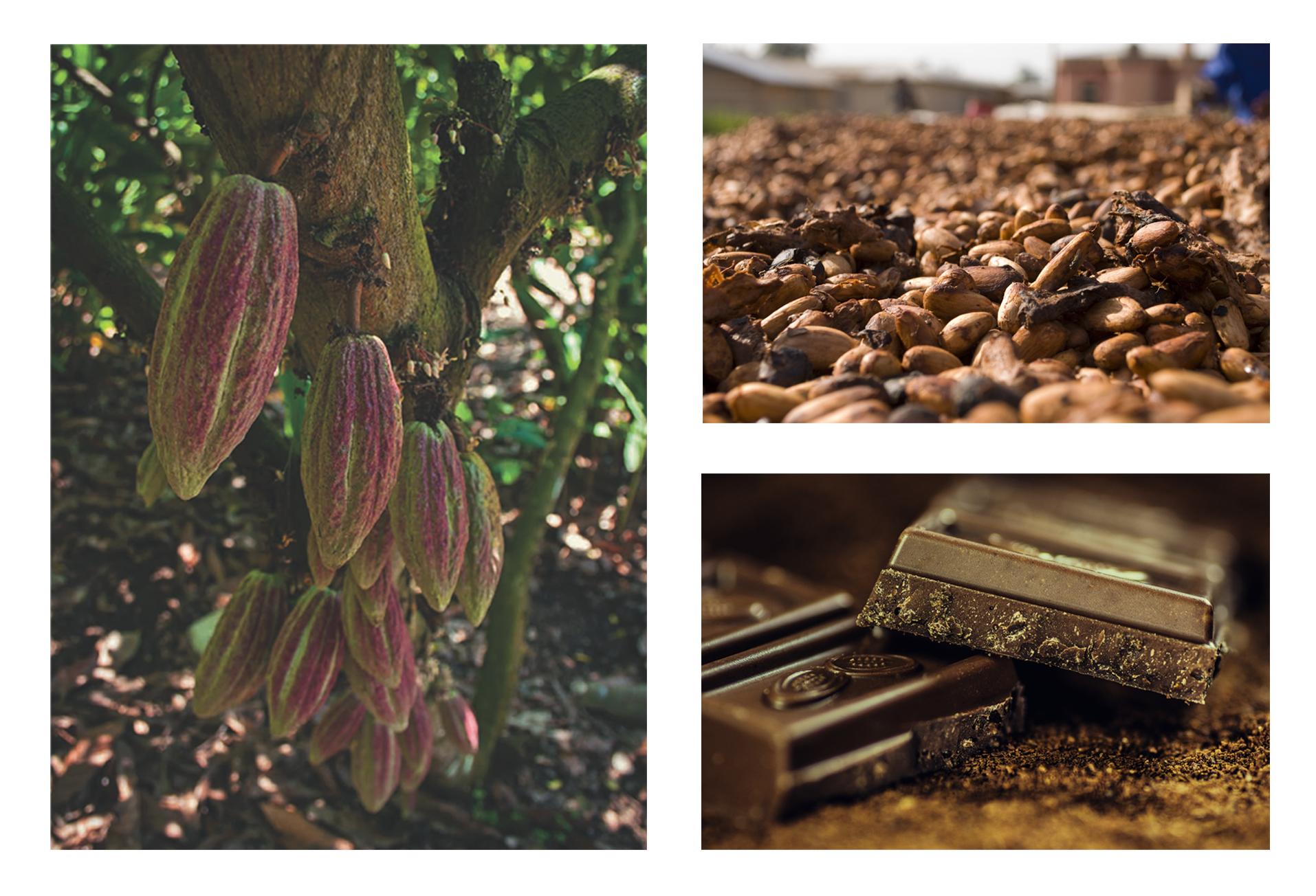 El chocolate provee servicios ambientales, ya que cultivada a la sombra favorece el desarrollo de gran cantidad de plantas, animales y hongos.
