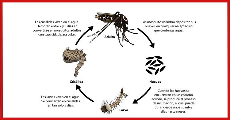 No dejes que los mosquitos entren a tu casa