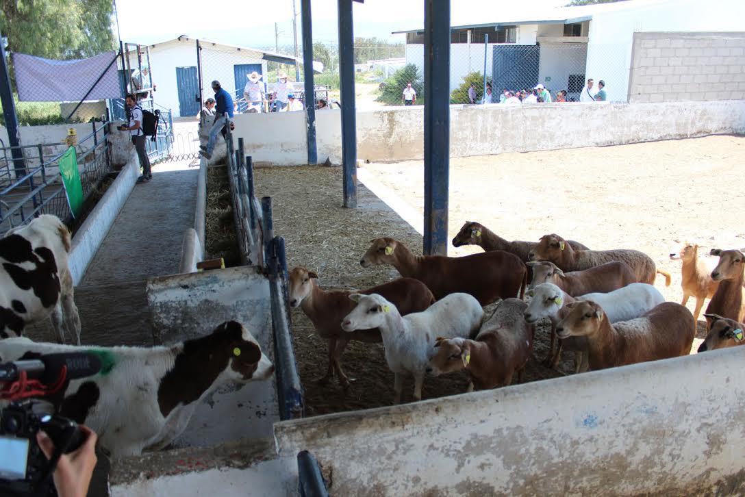 foto del seminario de evacuación de animales