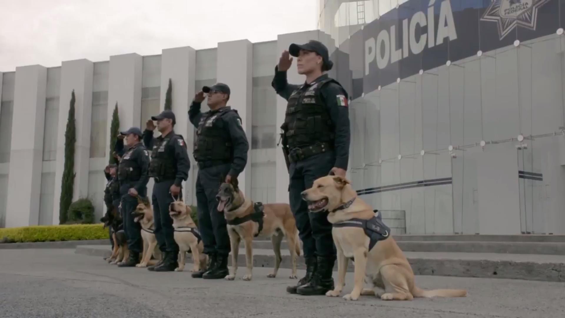 Unidad Canina de la Policía Federal