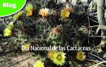 Cactáceas