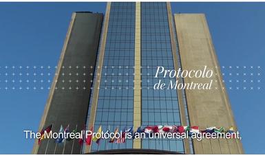 """""""Al cuidado de toda la vida en el planeta"""", es el lema con el que este año recordamos que el 16 de septiembre de 1987, un grupo de 24 países, entre ellos México, se reunió y firmó el Protocolo de Montreal."""