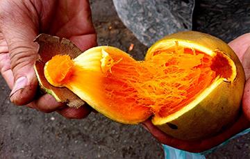 Zapote Fruta Tropical Típica De México Servicio De