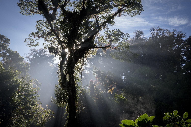 Esta administración trabaja en favor de los bosques, principales sumideros de carbón.   Foto: Reserva de la Biosfera El Triunfo. Miguel Ángel Cruz Ríos
