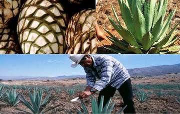 Promoverán Destilados de Origen para incentivar su consumo en la ciudad de México