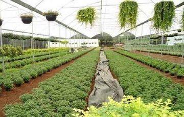 Crece Exportación de Productos Agrícolas y Ornamentales de Morelos al Extranjero