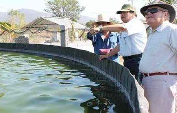 Realiza Recorrido Delegado de la SAGARPA en Tlaltizapan, en Proyectos Agropecuarios Exitosos de la Entidad