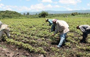 Ha Entregado PROCAMPO Productivo en Morelos más de 20 Millones de Pesos en lo Que Va del 2013
